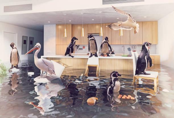 oiseaux dans la cuisine d'inondation - desastre natural photos et images de collection
