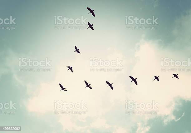 Birds in the sky picture id499652092?b=1&k=6&m=499652092&s=612x612&h=kcyqf fa7xymj2xh pusca1ydrzqis2ad5tcdr0plik=