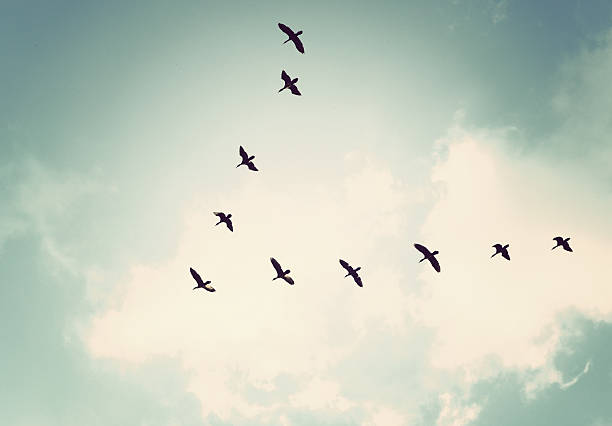 Birds in the sky Vintage tone in this picture flock of birds stock pictures, royalty-free photos & images