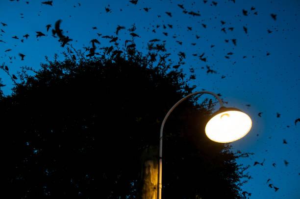 Birds in the sky picture id849626262?b=1&k=6&m=849626262&s=612x612&w=0&h=qasnqgyvd1rzflyxtefzs9otgnq ab2hytgd r3kfny=