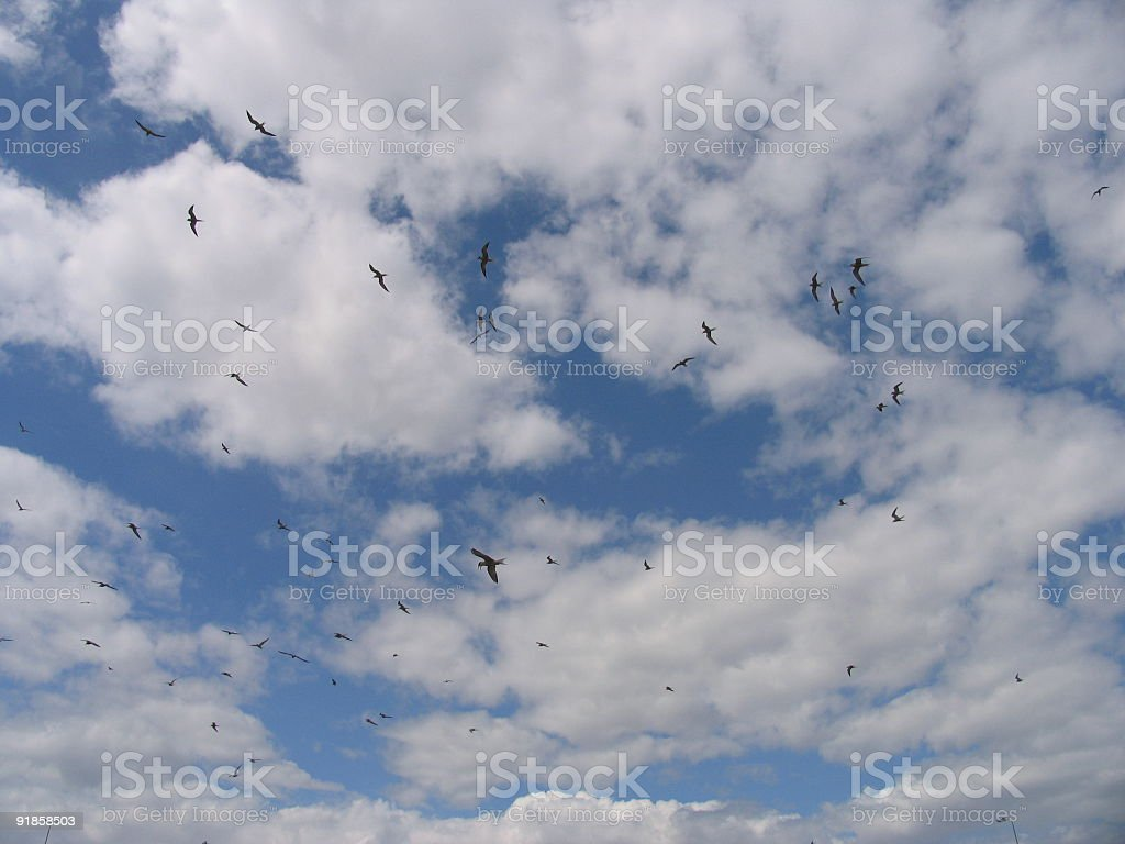 Birds in the sky royalty-free stock photo