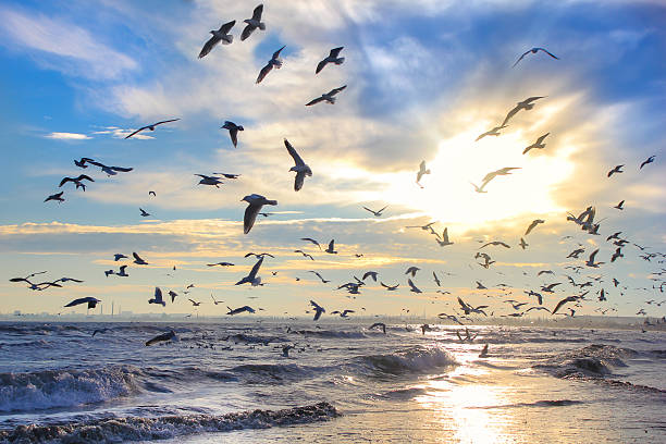 uccelli di sole contro il cielo e il mare - uccello marino foto e immagini stock
