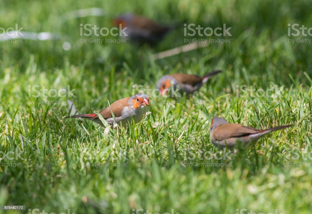 Kuşlar, böcekler ve hayvanlar, Huntington Central Park royalty-free stock photo