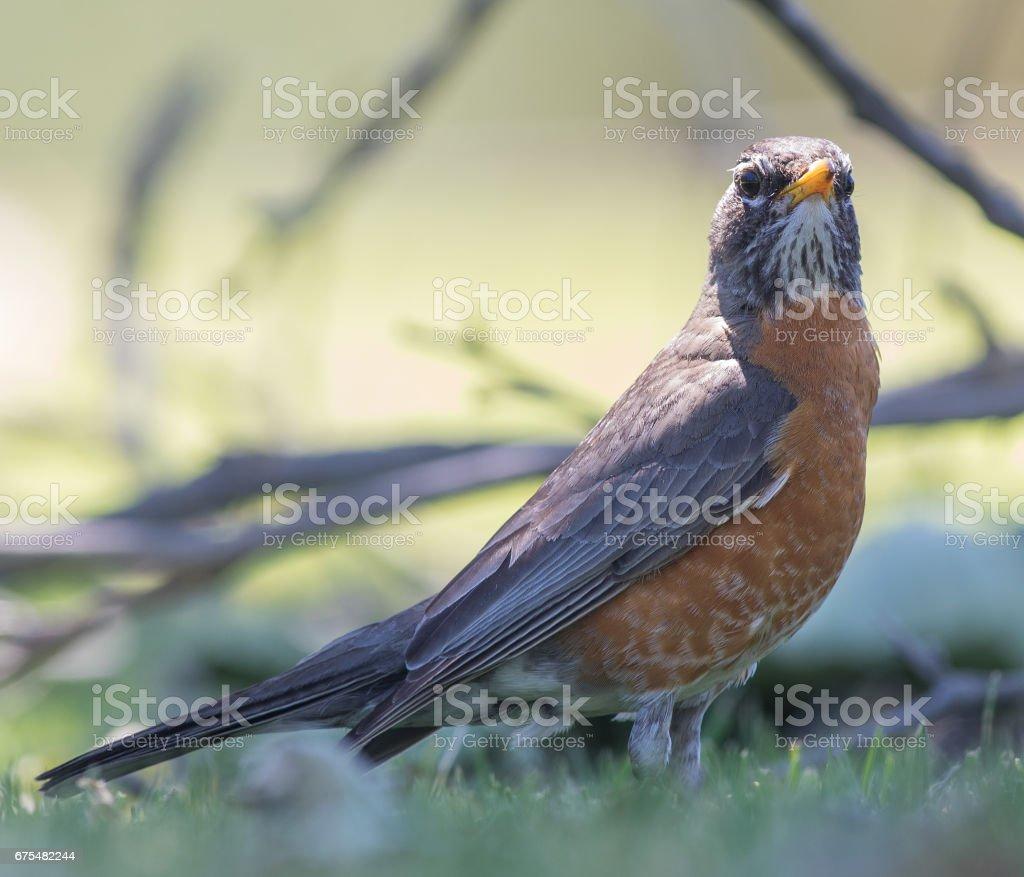 Les oiseaux, les insectes et les animaux sauvages dans le parc Central de Huntington photo libre de droits