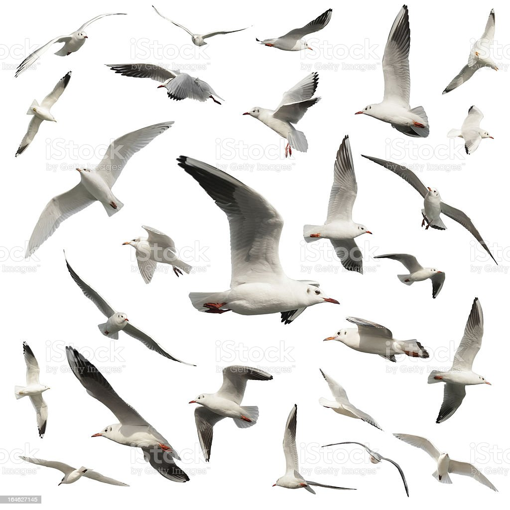 birds isolated on white stock photo