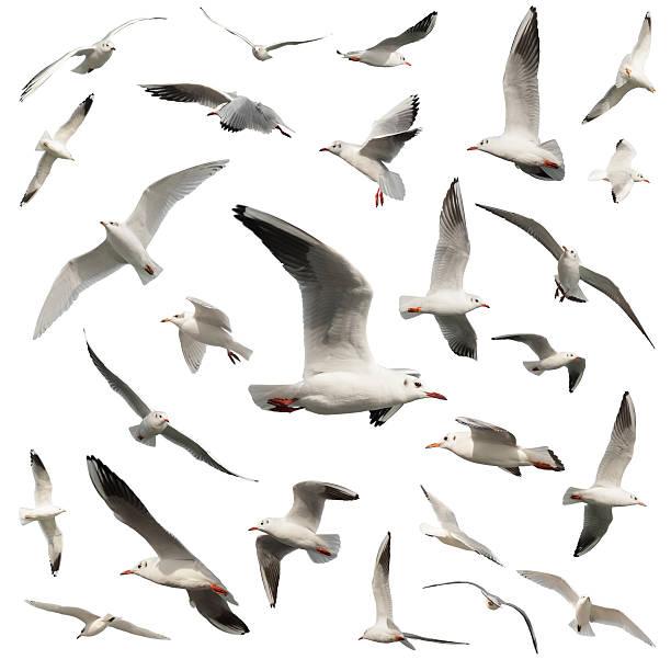 Aves Aislado en blanco - foto de stock
