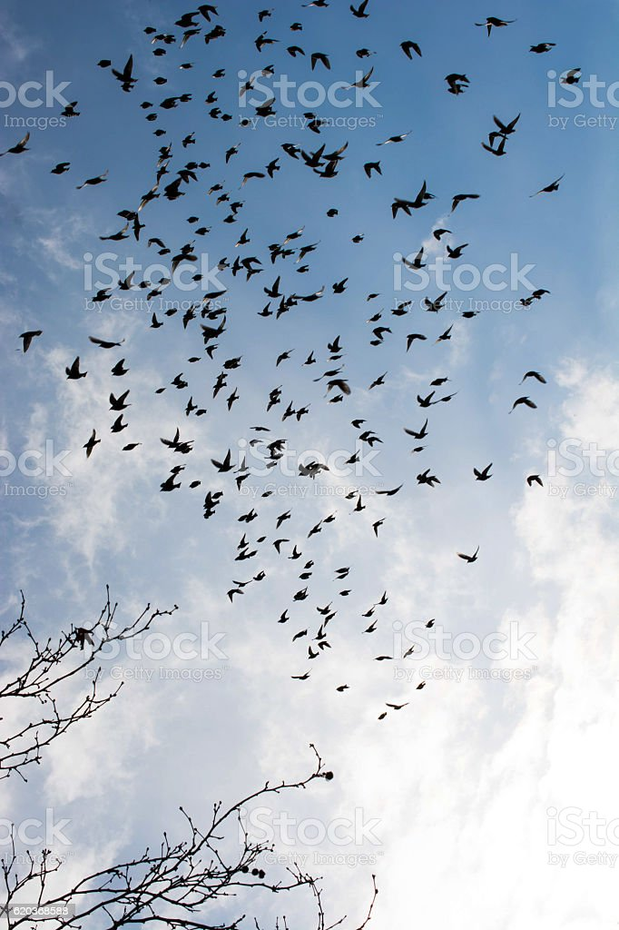 Birds lives in the natural environment foto de stock royalty-free