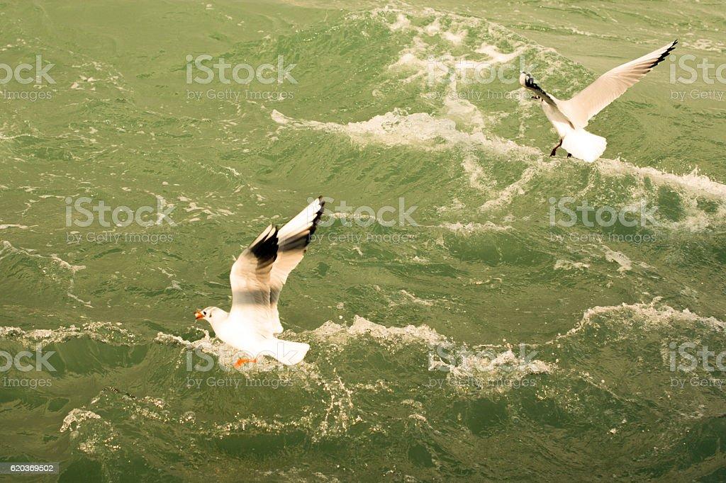 Birds lives in the natural environment zbiór zdjęć royalty-free