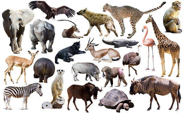 uccelli, mammifero e altri animali dell'africa isolato - macaco foto e immagini stock