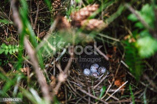 istock Birds Nest and Eggs on Forest Floor 1325943371