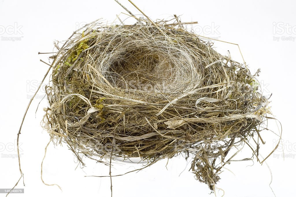 Birds Nest on white background stock photo