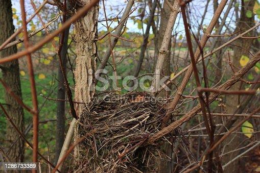 ein Vogelnest zwischen den Zweigen