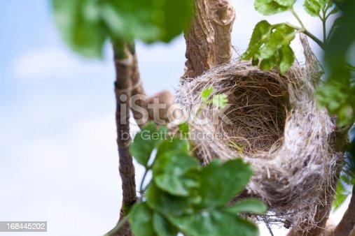 istock Bird's Nest 168445202