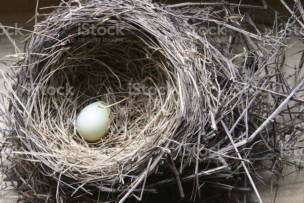 Bird's Nest royalty-free stock photo