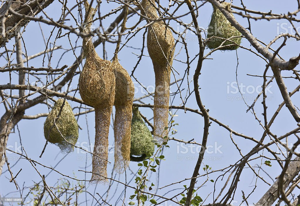 Bird's nest royalty-free stock photo