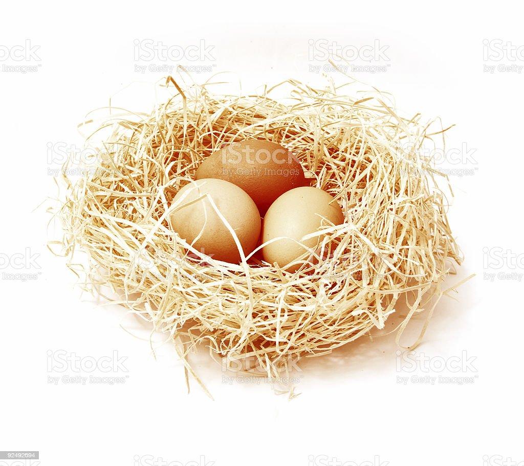 Birds Nest royalty-free stock photo