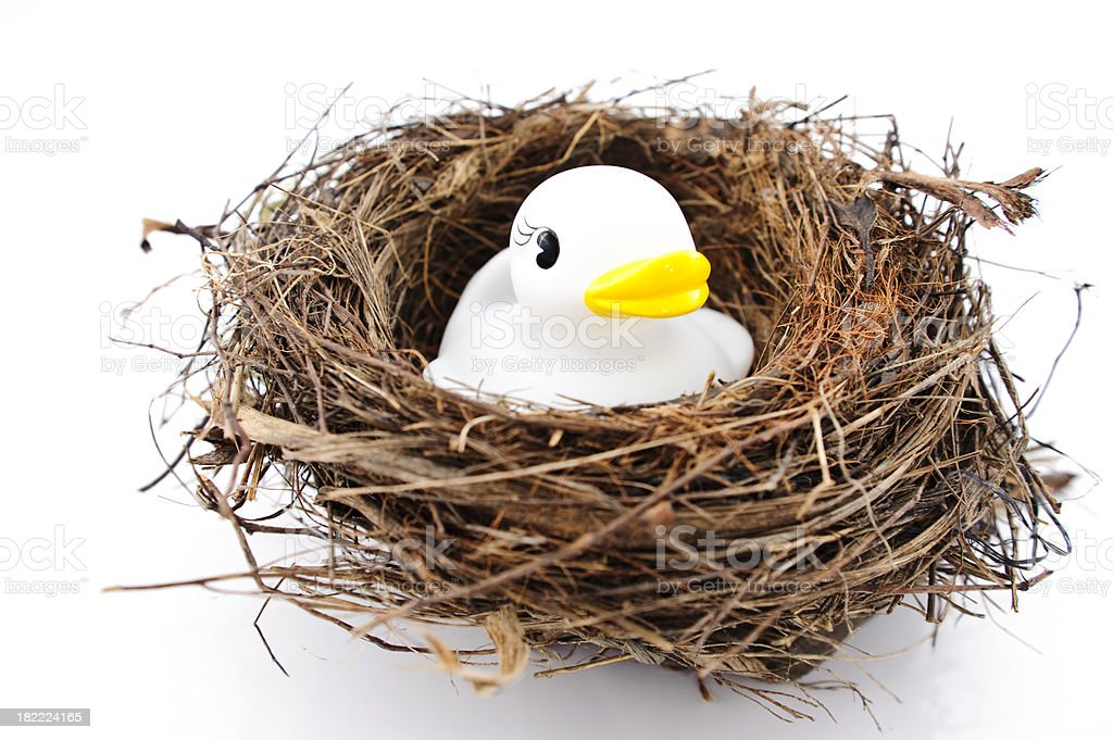 Bird's nest rubber duck isolated on white royalty-free stock photo