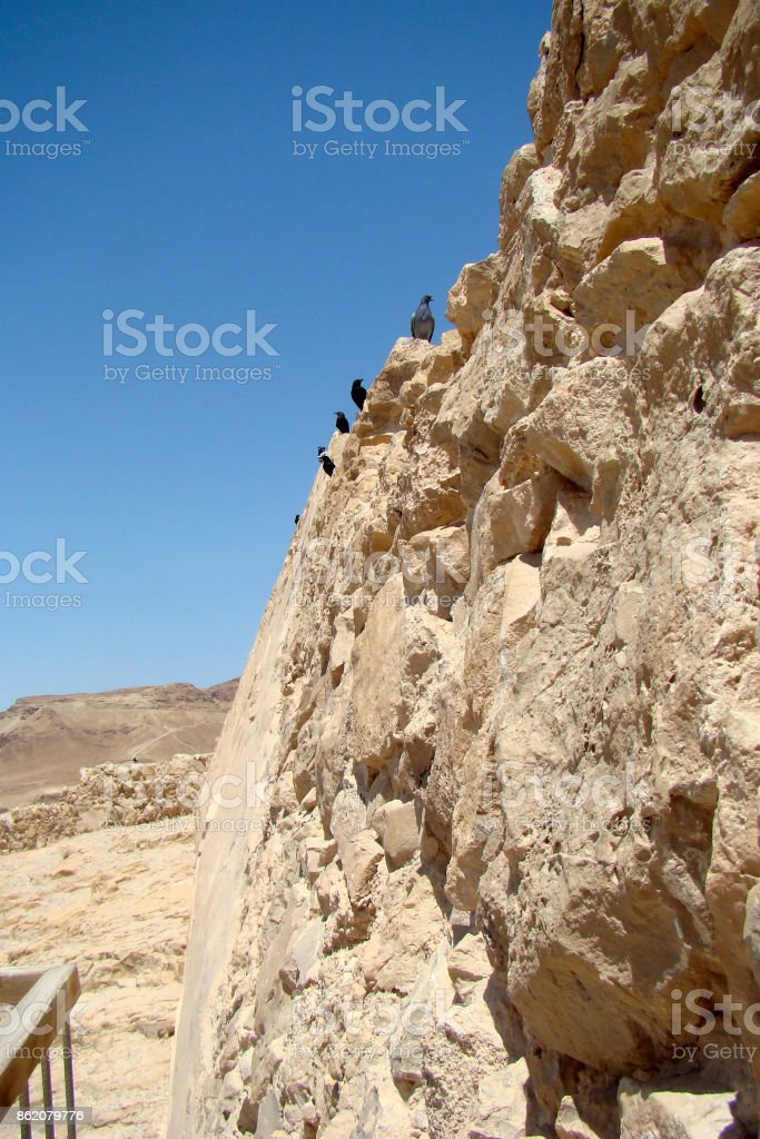 Birds nest to the jewish rock fortress of Masada stock photo