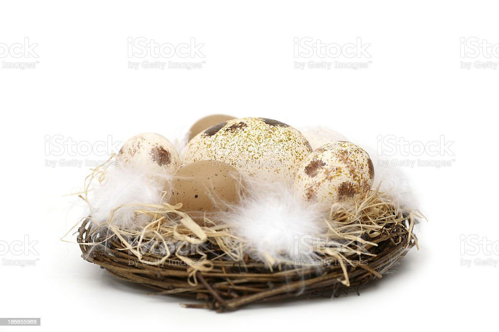 Bird's nest with different eggs, isolated stock photo
