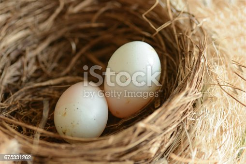 Haemorhous mexicanus egg, laying next to another in a bird`s nest.