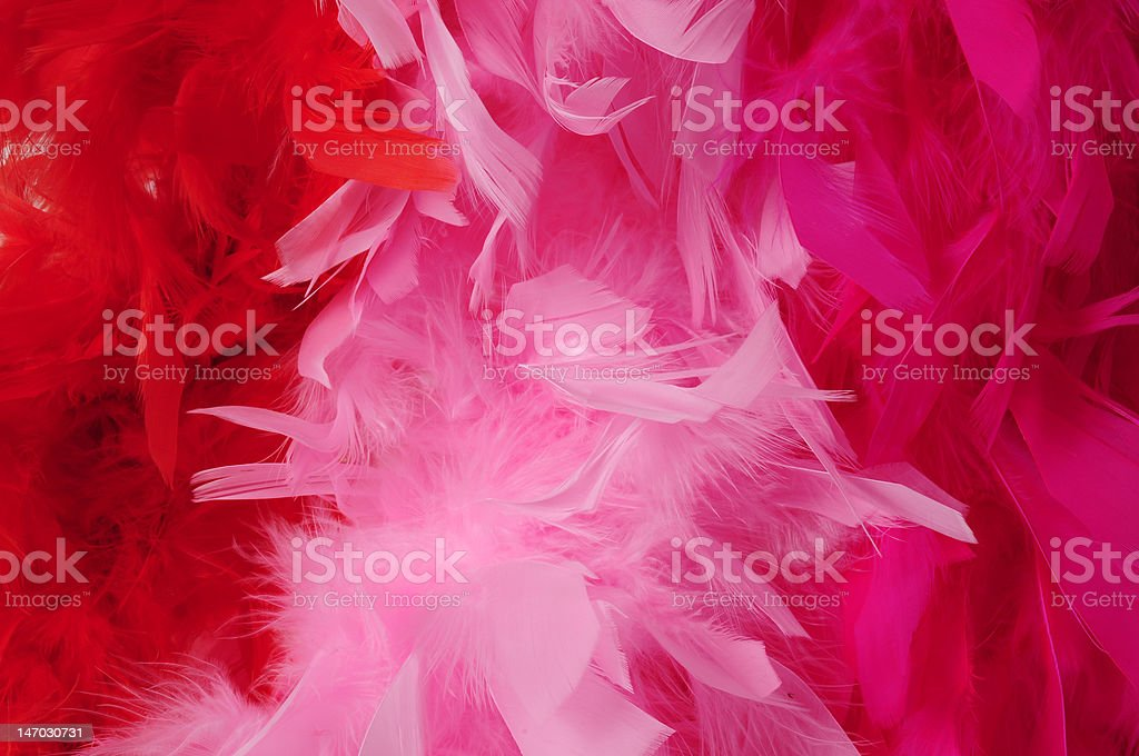 Birds of a feather flock together stock photo