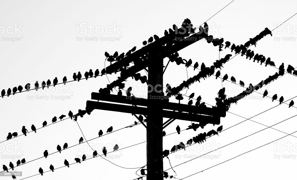 Aves de una pluma. foto de stock libre de derechos