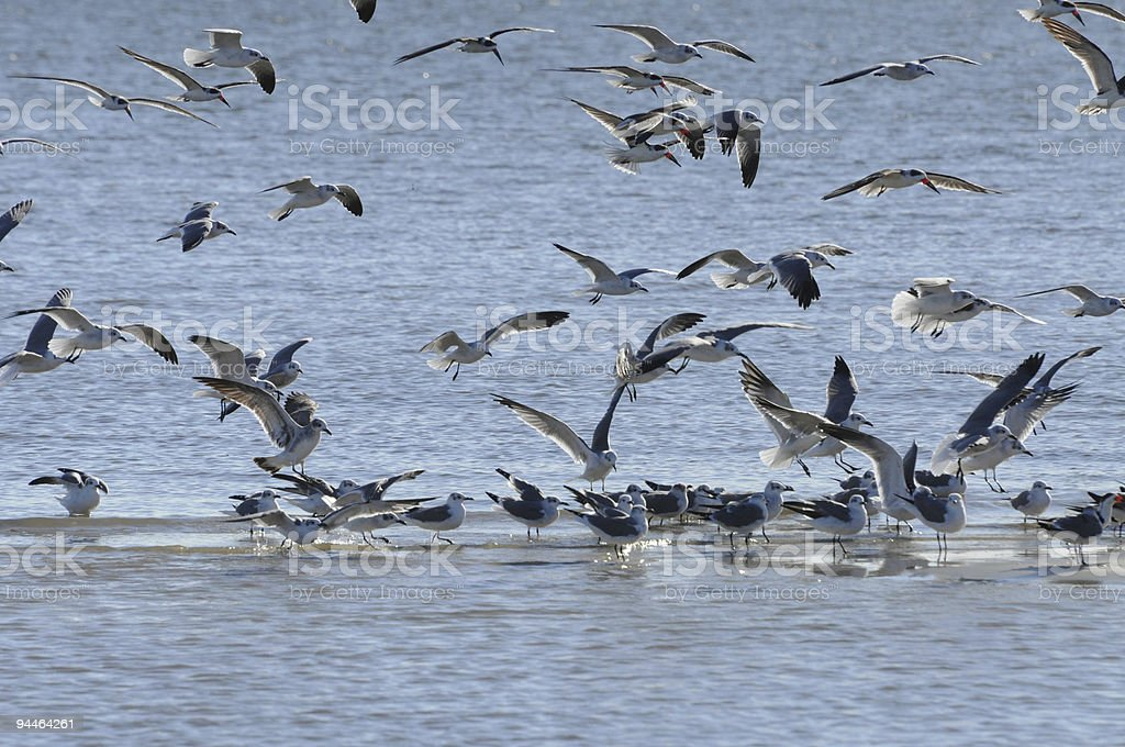 Birds of a Feather royalty-free stock photo