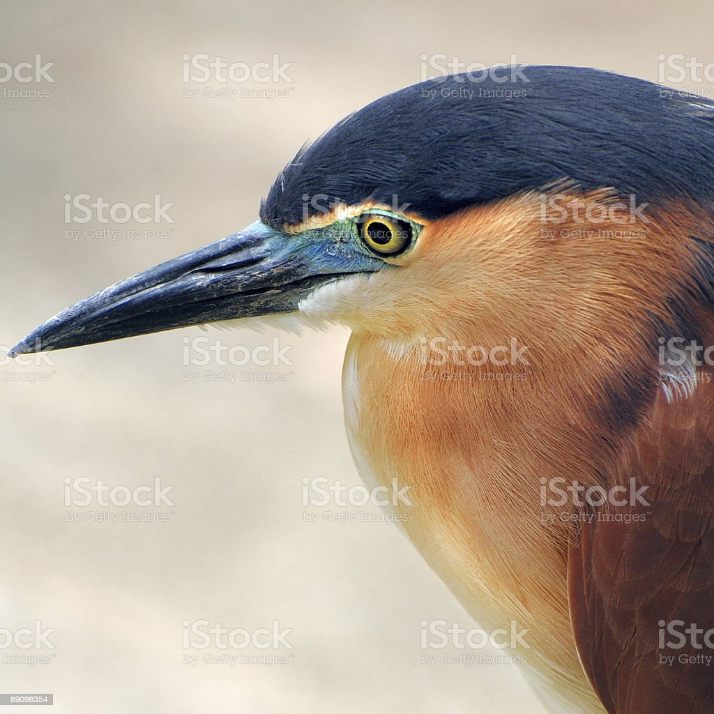 Birds of  Birdpark royalty-free stock photo
