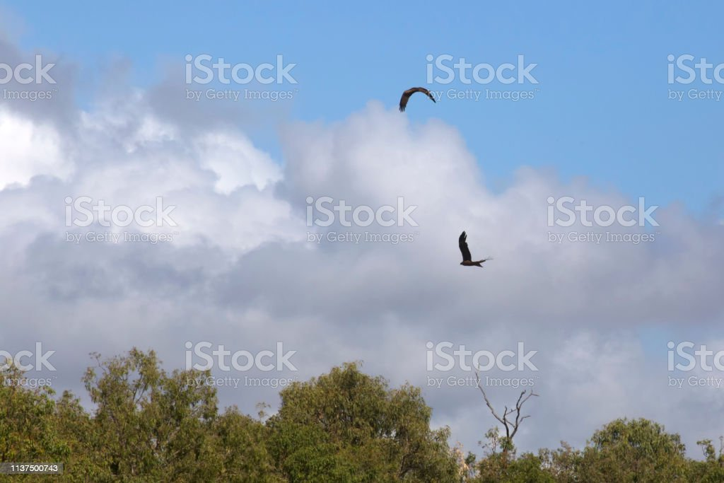 Birds Of Prey And Cloudy Sky On The Atherton Tablelands In Tropical North Queensland Australia Stock Photo Download Image Now Istock