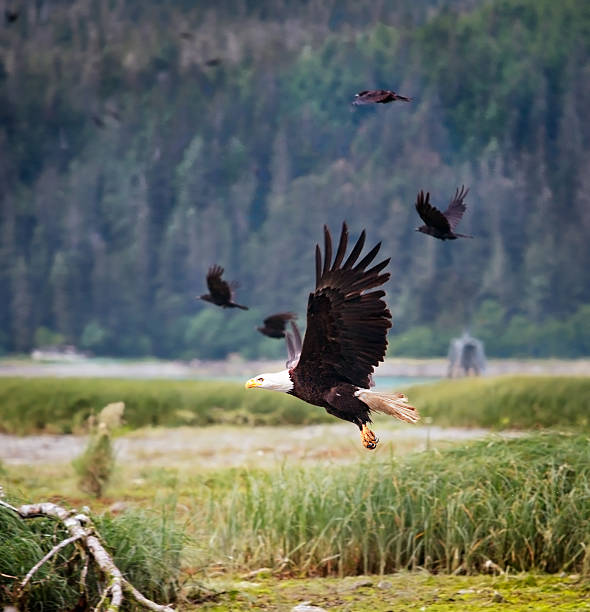 Birds of prey take flight stock photo