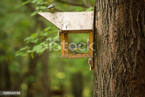 139975532 istock photo Birds of the tit on a wooden feeder on a tree in the forest. 1033440734