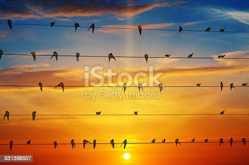 istock birds on a background of sunrise 531398507