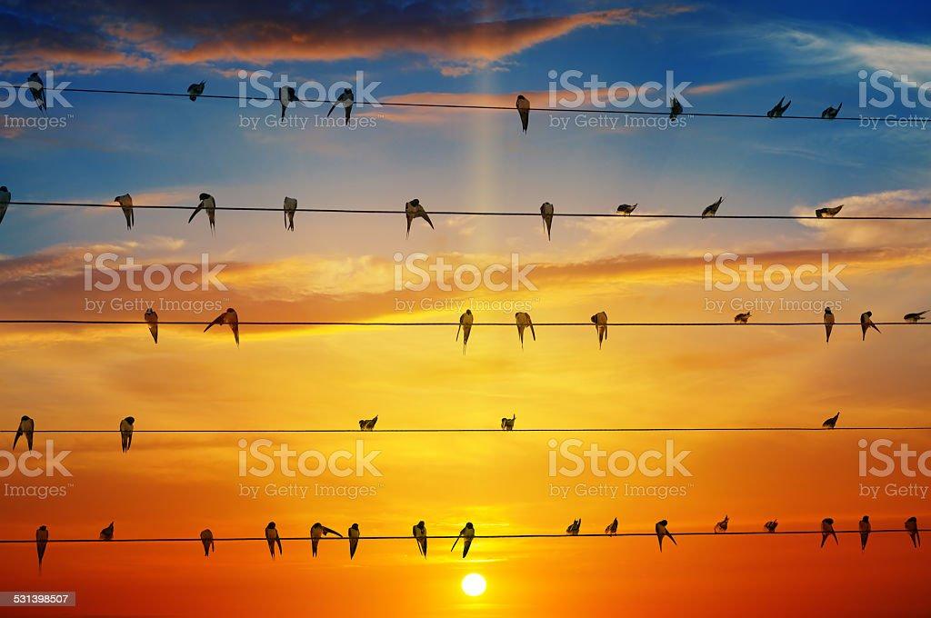 birds on a background of sunrise stock photo