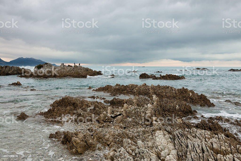 Birds on a rock on ocean shore stock photo