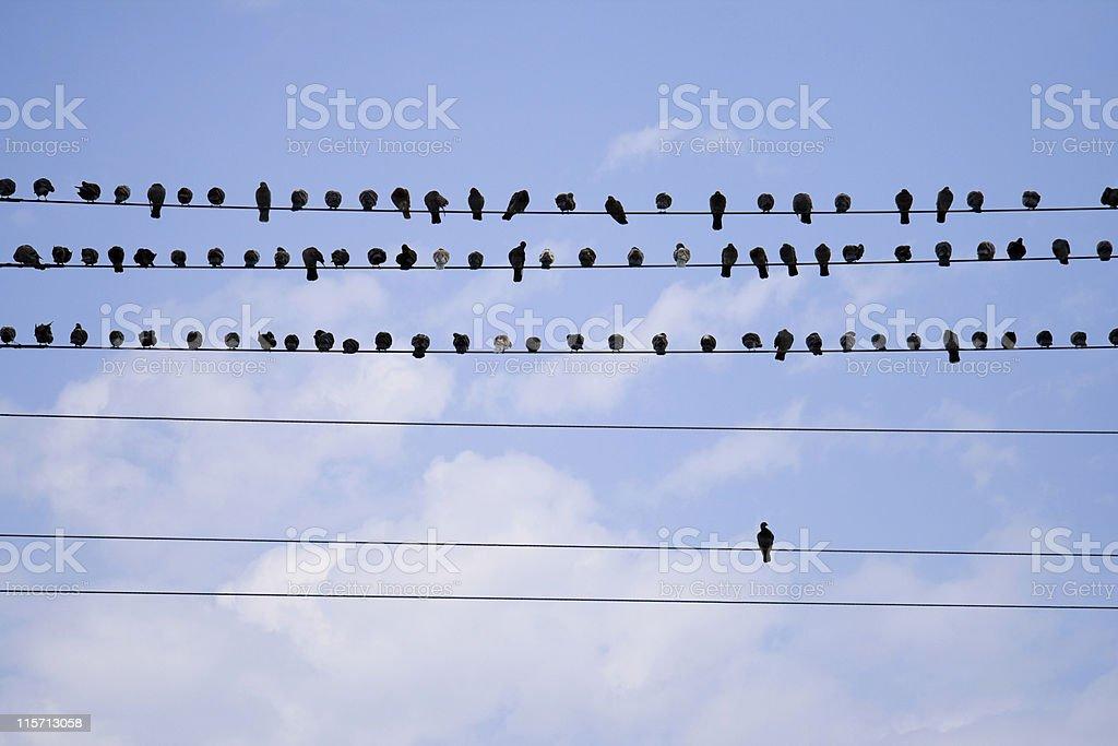 Vögel Auf Eine Telefonleitung Stock-Fotografie und mehr Bilder von ...