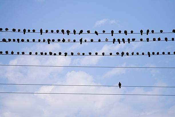 Birds On A Telephone Line stock photo
