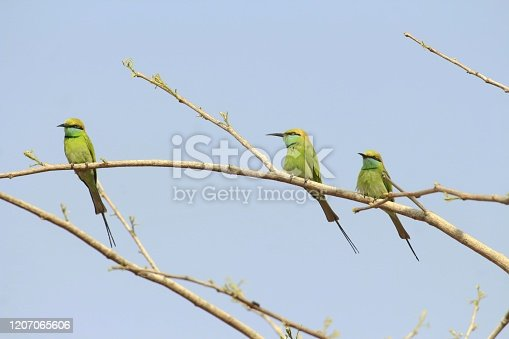 521620252 istock photo Birds on a twig 1207065606