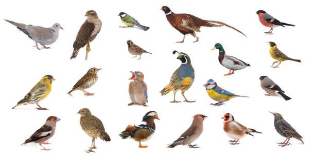 birds on a white stock photo