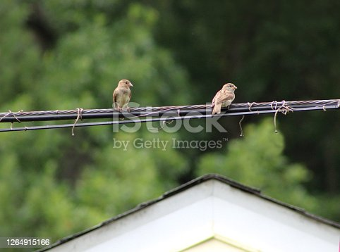 istock Birds on a Wire by a Rooftop 1264915166