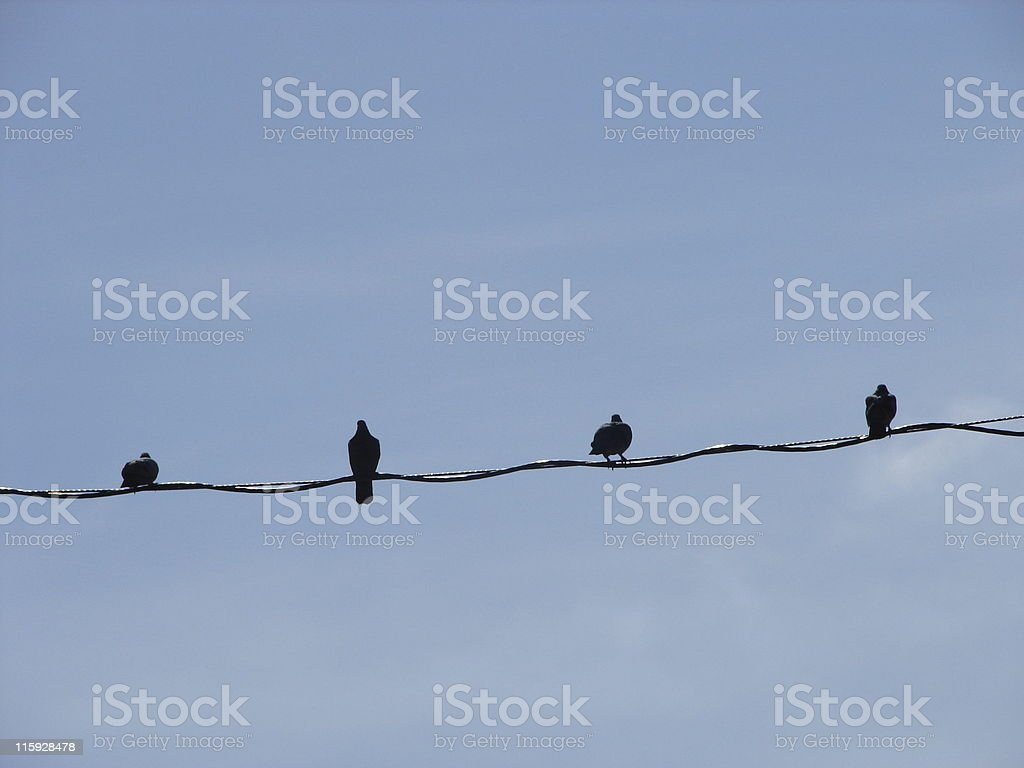 Birds on a wire - four stock photo