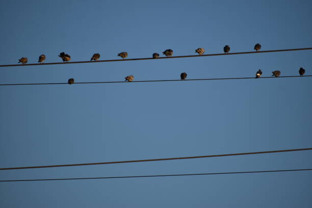 birds on a wire - steven harrie stock photos and pictures