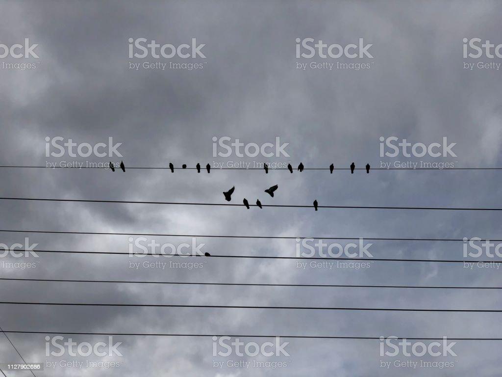 Birds on a wire set against a gloomy sky. stock photo