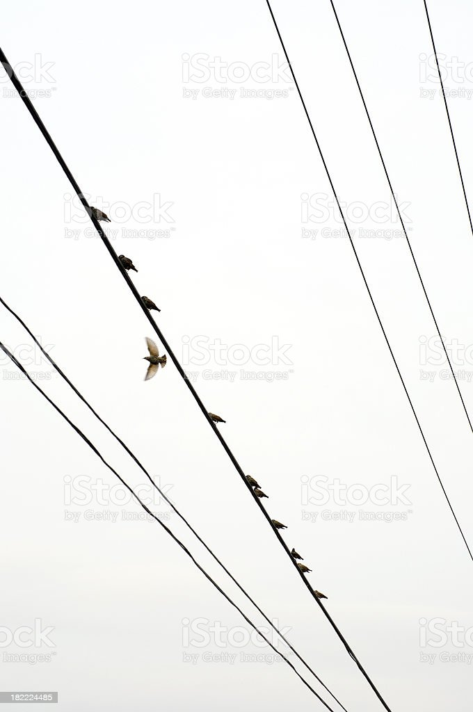 Birds on a wire vertical royalty-free stock photo
