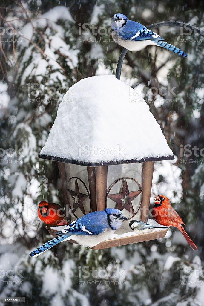 Birds on bird feeder in winter stock photo