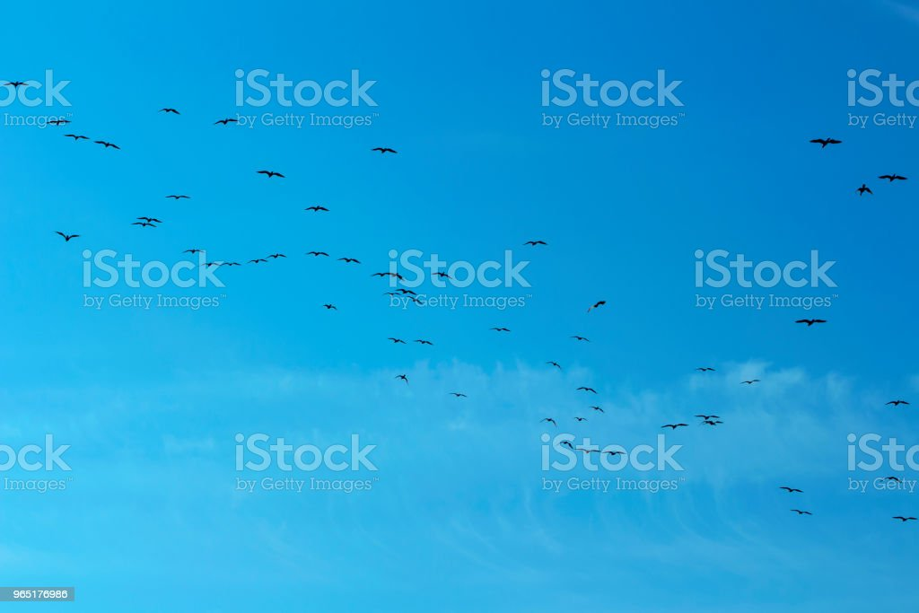 birds on blue sky royalty-free stock photo