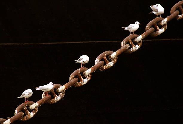 Birds on chain stock photo
