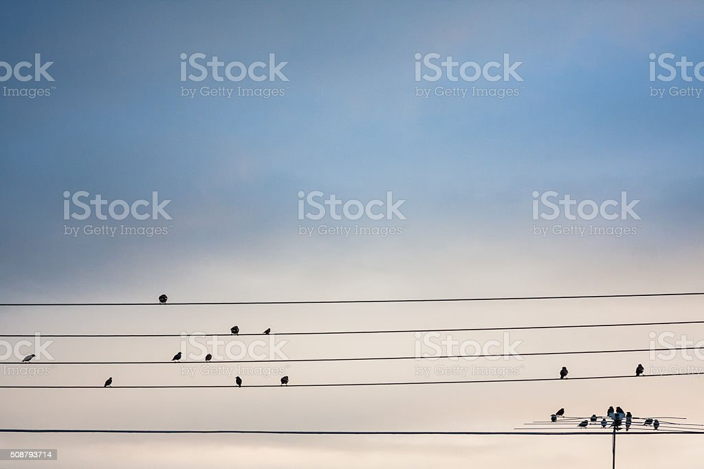 Birds on electric lines stock photo