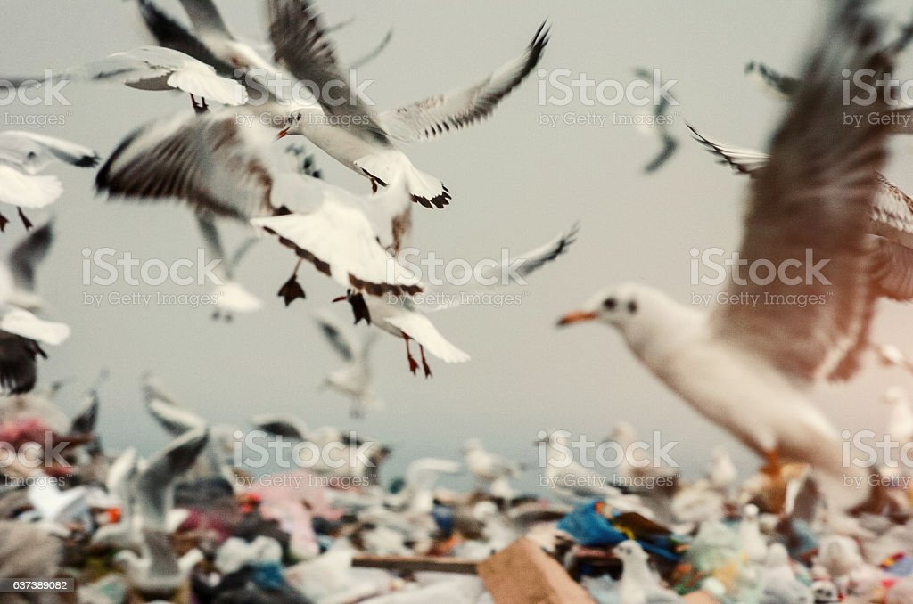 Birds on landfill garbage stock photo