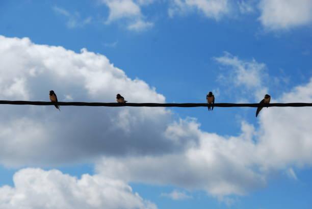 Pájaros en cable de teléfono - foto de stock
