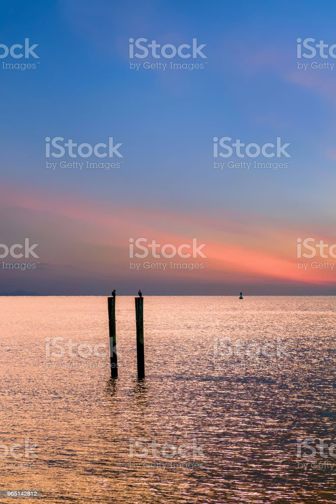 Birds on Pilings Against Sunset royalty-free stock photo